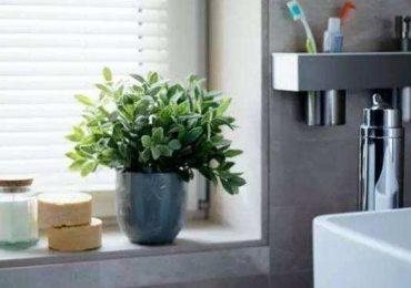Cách làm sạch phòng tắm nhanh chóng, tiết kiệm thời gian, công sức