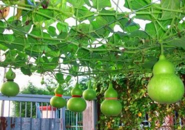 Những loại cây nên trồng ở sân vườn để trấn trạch, hóa sát